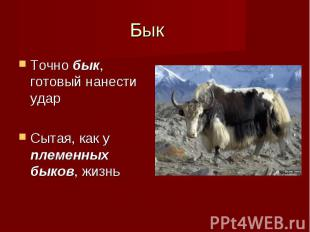 Точно бык, готовый нанести удар Точно бык, готовый нанести удар Сытая, как у пле