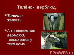 Телячья жалость Телячья жалость А ты совсем как верблюд, только рогов у тебя нем