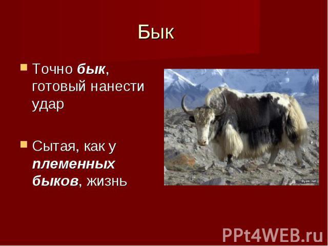 Точно бык, готовый нанести удар Точно бык, готовый нанести удар Сытая, как у племенных быков, жизнь