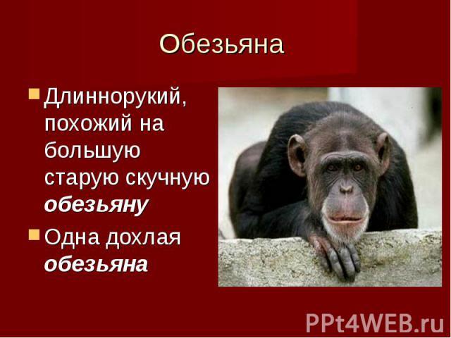 Длиннорукий, похожий на большую старую скучную обезьяну Длиннорукий, похожий на большую старую скучную обезьяну Одна дохлая обезьяна
