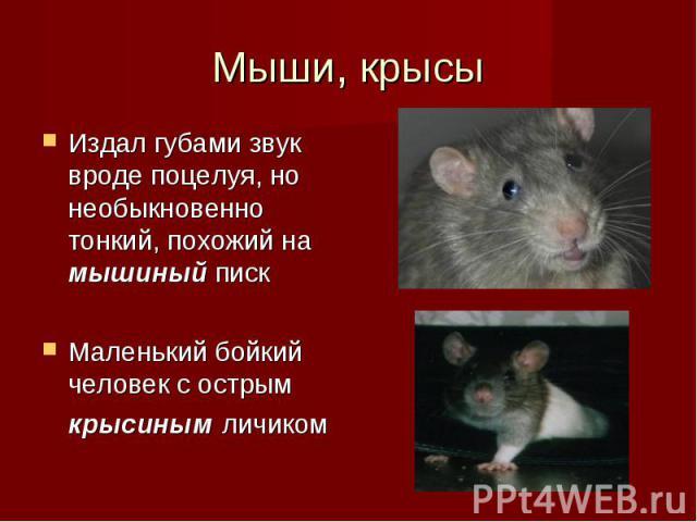 Издал губами звук вроде поцелуя, но необыкновенно тонкий, похожий на мышиный писк Издал губами звук вроде поцелуя, но необыкновенно тонкий, похожий на мышиный писк Маленький бойкий человек с острым крысиным личиком