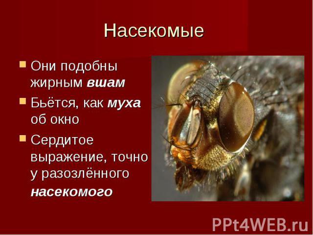 Они подобны жирным вшам Они подобны жирным вшам Бьётся, как муха об окно Сердитое выражение, точно у разозлённого насекомого