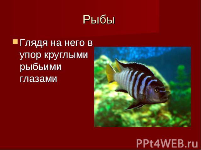 Глядя на него в упор круглыми рыбьими глазами Глядя на него в упор круглыми рыбьими глазами