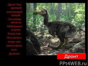 Дронт был крупной Дронт был крупной нелетающей птицей. Эти птицы жили на Небольш