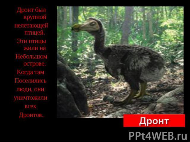 Дронт был крупной Дронт был крупной нелетающей птицей. Эти птицы жили на Небольшом острове. Когда там Поселились люди, они уничтожили всех Дронтов.