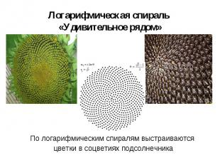 По логарифмическим спиралям выстраиваются По логарифмическим спиралям выстраиваю