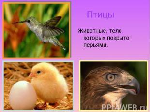 Животные, тело которых покрыто перьями. Животные, тело которых покрыто перьями.
