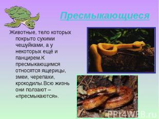 Животные, тело которых покрыто сухими чешуйками, а у некоторых ещё и панцирем.К