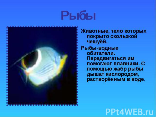 Животные, тело которых покрыто скользкой чешуёй. Животные, тело которых покрыто скользкой чешуёй. Рыбы-водные обитатели. Передвигаться им помогают плавники. С помощью жабр рыбы дышат кислородом, растворённым в воде.