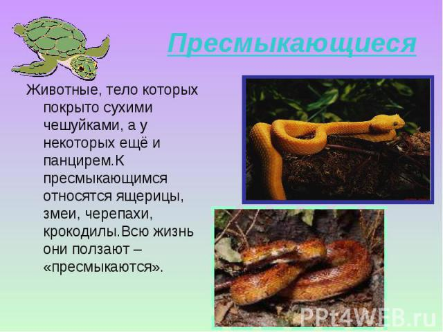 Животные, тело которых покрыто сухими чешуйками, а у некоторых ещё и панцирем.К пресмыкающимся относятся ящерицы, змеи, черепахи, крокодилы.Всю жизнь они ползают – «пресмыкаются». Животные, тело которых покрыто сухими чешуйками, а у некоторых ещё и …