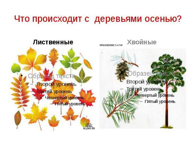 Что происходит с деревьями осенью? Лиственные