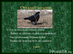 3).Что за весенняя чёрная птица 3).Что за весенняя чёрная птица Любит за плугом