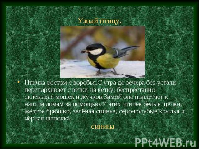 Птичка ростом с воробья.С утра до вечера без устали перепархивает с ветки на ветку, беспрестанно склёвывая мошек и жучков.Зимой она прилетает к нашим домам за помощью.У этих птичек белые щёчки, жёлтое брюшко, зелёная спинка, серо-голубые крылья и чё…