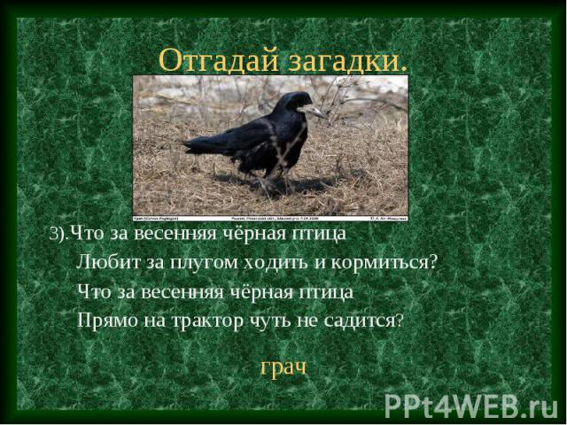 3).Что за весенняя чёрная птица 3).Что за весенняя чёрная птица Любит за плугом ходить и кормиться? Что за весенняя чёрная птица Прямо на трактор чуть не садится?