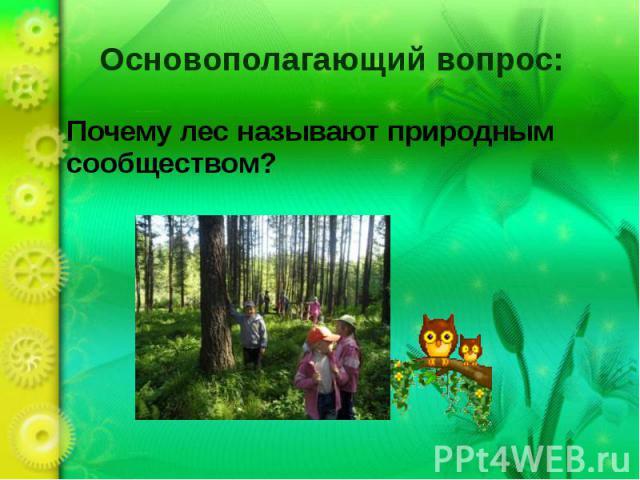 Основополагающий вопрос: Почему лес называют природным сообществом?