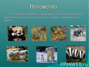 У большинства зверей весной рождаются детеныши. Взрослые животные заботятся о св