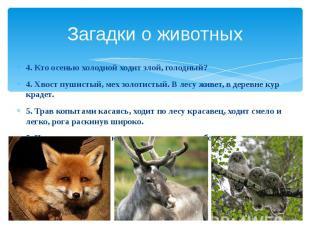 Загадки о животных 4. Кто осенью холодной ходит злой, голодный? 4. Хвост пушисты