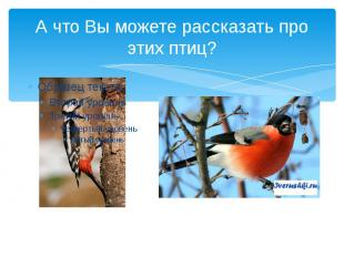 А что Вы можете рассказать про этих птиц?