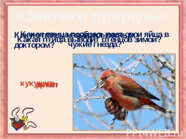 Какая птица подбрасывает свои яйца в чужие гнёзда?