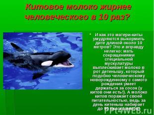 И как это матери-киты умудряются выкормить дите длиной около 10 метров? Это и вп