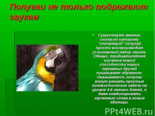 """Существует мнение, согласно которому """"говорящий"""" попугай просто воспро"""