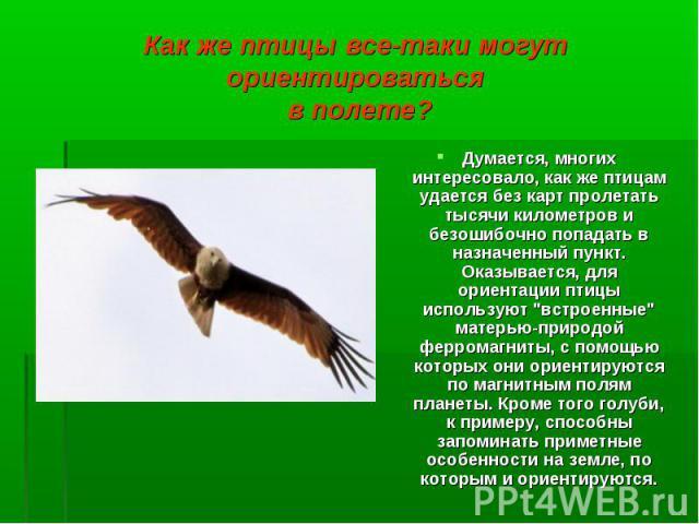 """Думается, многих интересовало, как же птицам удается без карт пролетать тысячи километров и безошибочно попадать в назначенный пункт. Оказывается, для ориентации птицы используют """"встроенные"""" матерью-природой ферромагниты, с помощью которы…"""