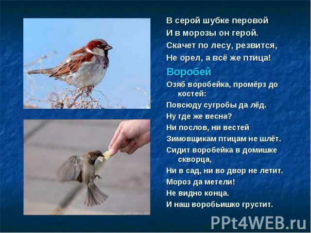 В серой шубке перовой В серой шубке перовой И в морозы он герой. Скачет по лесу, резвится, Не орел, а всё же птица! Воробей Озяб воробейка, промёрз до костей: Повсюду сугробы да лёд. Ну где же весна? Ни послов, ни вестей Зимовщикам птицам не шлёт. С…
