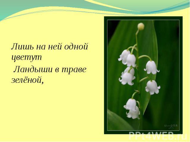 Лишь на ней одной цветут Лишь на ней одной цветут Ландыши в траве зелёной,