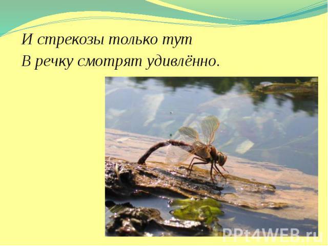 И стрекозы только тут И стрекозы только тут В речку смотрят удивлённо.
