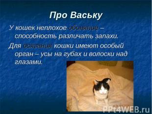 У кошек неплохое обоняние – способность различать запахи. У кошек неплохое обоня