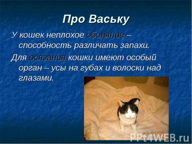 У кошек неплохое обоняние – способность различать запахи. У кошек неплохое обоняние – способность различать запахи. Для осязания кошки имеют особый орган – усы на губах и волоски над глазами.