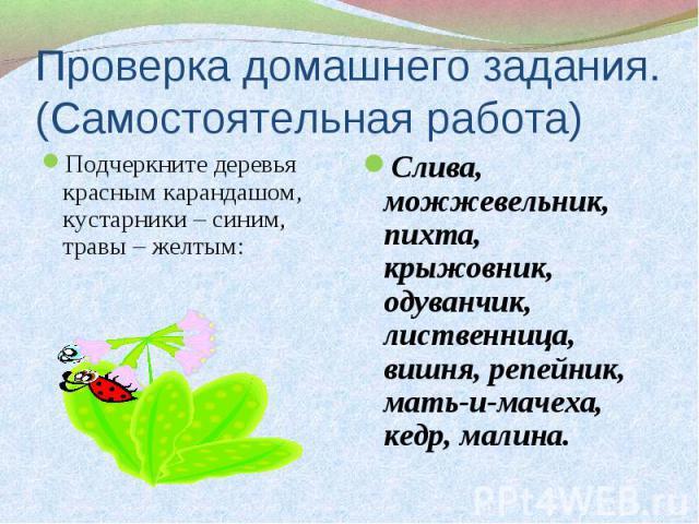Подчеркните деревья красным карандашом, кустарники – синим, травы – желтым: Подчеркните деревья красным карандашом, кустарники – синим, травы – желтым: