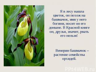 Я в лесу нашла цветок, он похож на башмачок, имя у него богини, но