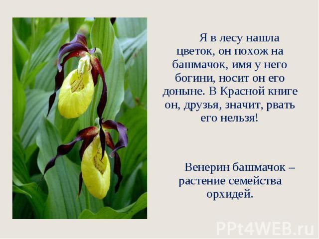 Я в лесу нашла цветок, он похож на башмачок, имя у него богини, носит он его доныне. В Красной книге он, друзья, значит, рвать его нельзя! Венерин башмачок – растение семейства орхидей.