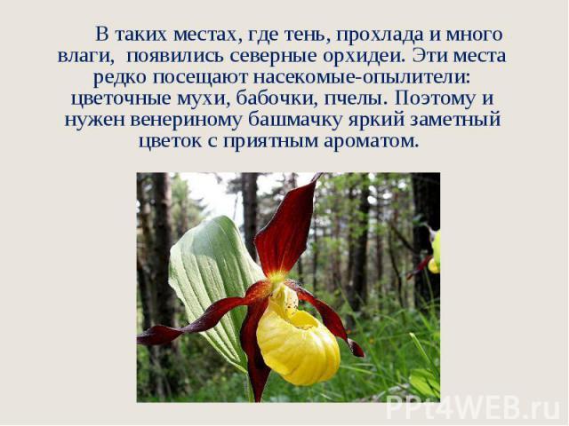 В таких местах, где тень, прохлада и много влаги, появились северные орхидеи. Эти места редко посещают насекомые-опылители: цветочные мухи, бабочки, пчелы. Поэтому и нужен венериному башмачку яркий заметный цветок с приятным ароматом.