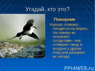 Пернатый разбойник, Пернатый разбойник, Разоритель птичьих гнёзд…