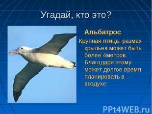 Пернатый с Пернатый с крыльями матрос и он же планер… (альбатрос)