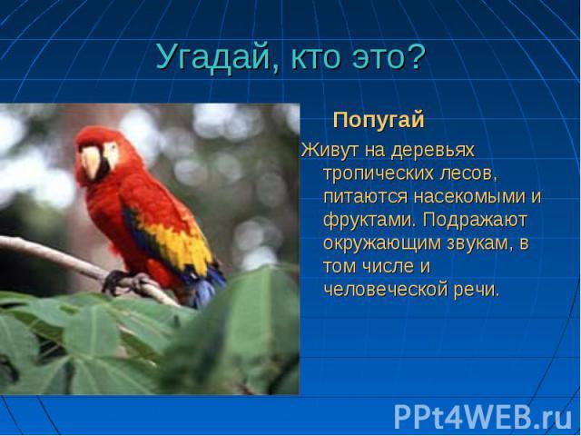 До чего красив наряд! До чего красив наряд! Ярко пёрышки горят! Будет с человеком жить— Птица сможет говорить.