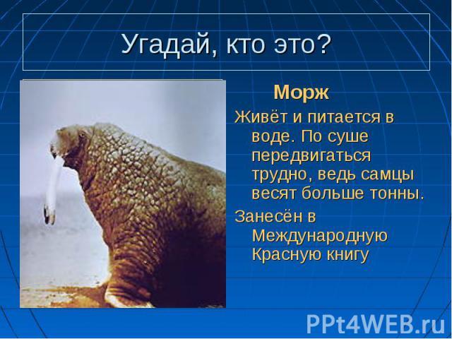 Плавает, а не рыба, Плавает, а не рыба, Толстый слой жира, а не тюлень, Есть бивни, а не слон