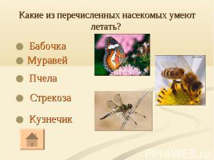 Бабочка Бабочка