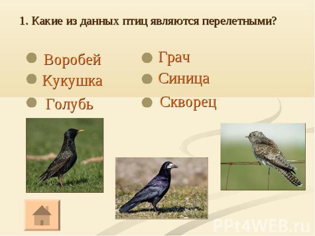 Воробей Воробей