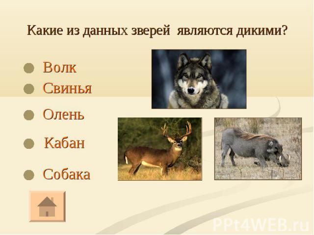 Волк Волк