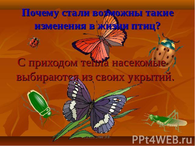 С приходом тепла насекомые выбираются из своих укрытий. С приходом тепла насекомые выбираются из своих укрытий.