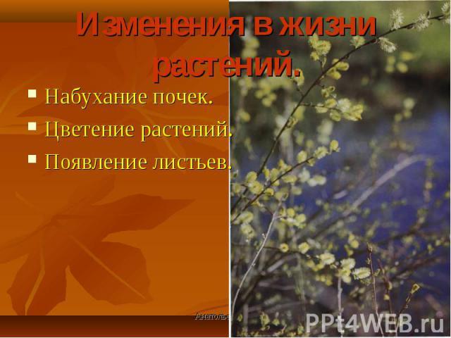 Набухание почек. Набухание почек. Цветение растений. Появление листьев.