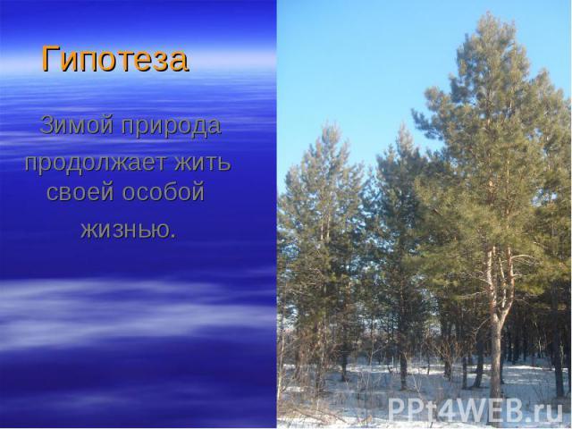 Зимой природа Зимой природа продолжает жить своей особой жизнью.