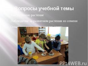 Вопросы учебной темы Как устроено растение Наблюдение за развитием растения из с