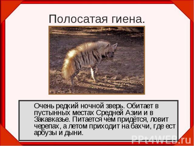 Очень редкий ночной зверь. Обитает в пустынных местах Средней Азии и в Закавказье. Питается чем придётся, ловит черепах, а летом приходит на бахчи, где ест арбузы и дыни. Очень редкий ночной зверь. Обитает в пустынных местах Средней Азии и в Закавка…