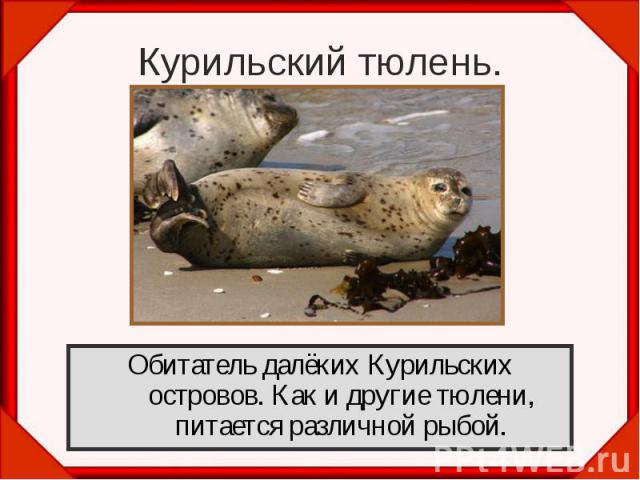 Обитатель далёких Курильских островов. Как и другие тюлени, питается различной рыбой. Обитатель далёких Курильских островов. Как и другие тюлени, питается различной рыбой.