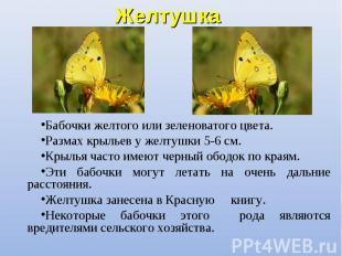 Бабочки желтого или зеленоватого цвета. Бабочки желтого или зеленоватого цвета.