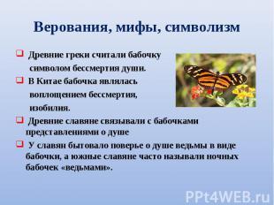 Древние греки считали бабочку Древние греки считали бабочку символом бессмертия